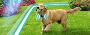 7 Best GPS Dog Fences – Buying Guide