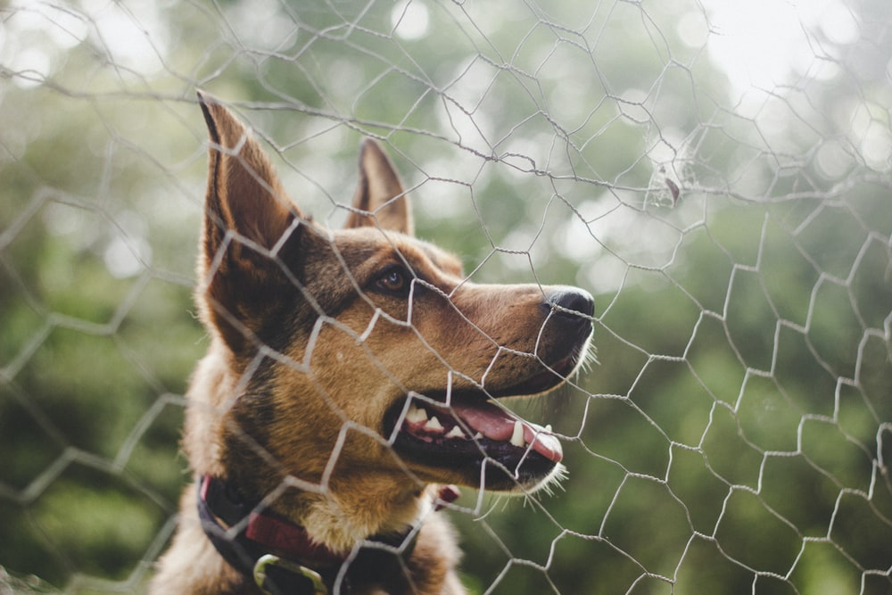 Best Dog Fence For German Shepherd